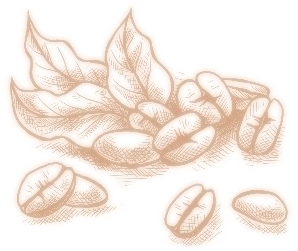 Illustration of Coffee Beans and Leaves